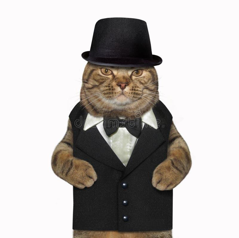Katt som kläs som en gentleman arkivfoton