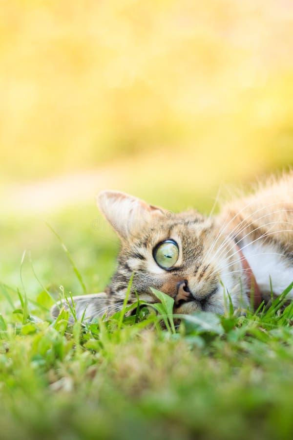 Katt som lägger i gräs arkivbild