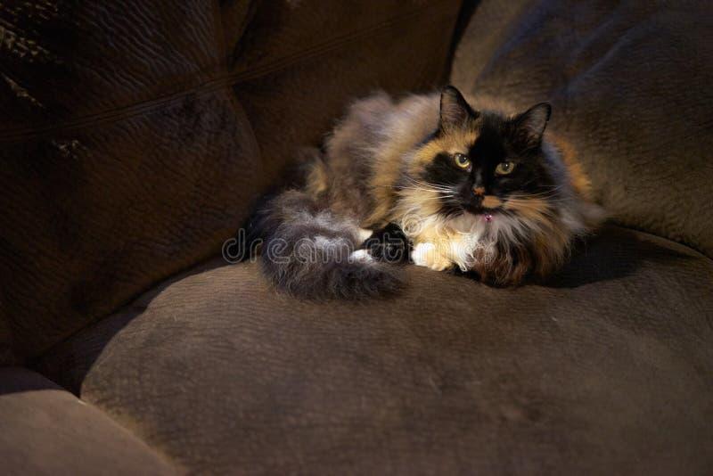 katt som lägger på soffan royaltyfri fotografi
