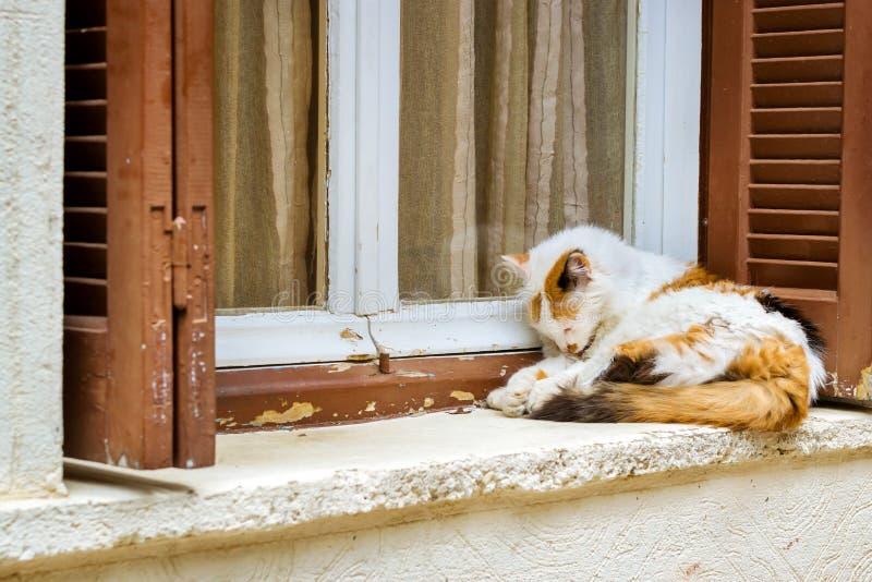 Katt som ligger på fönsterbräda crete greece rethymno royaltyfri fotografi