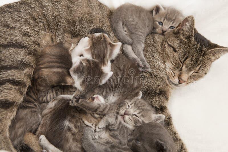 Katt som matar henne som är ung royaltyfria bilder