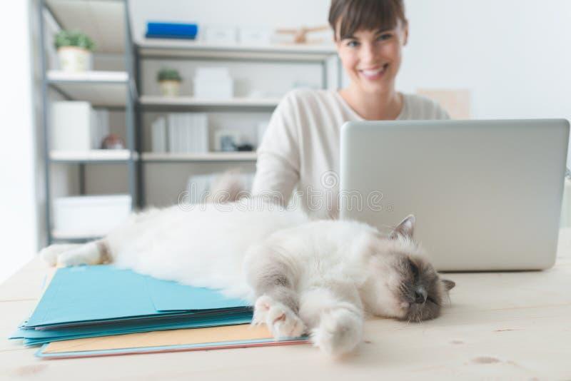 Katt som ner ligger på ett skrivbord arkivbilder