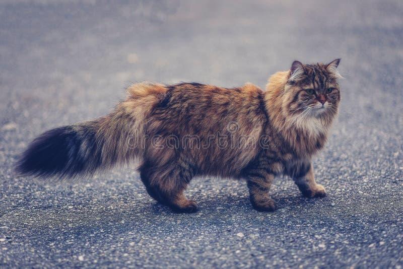 Katt som omkring går royaltyfri bild