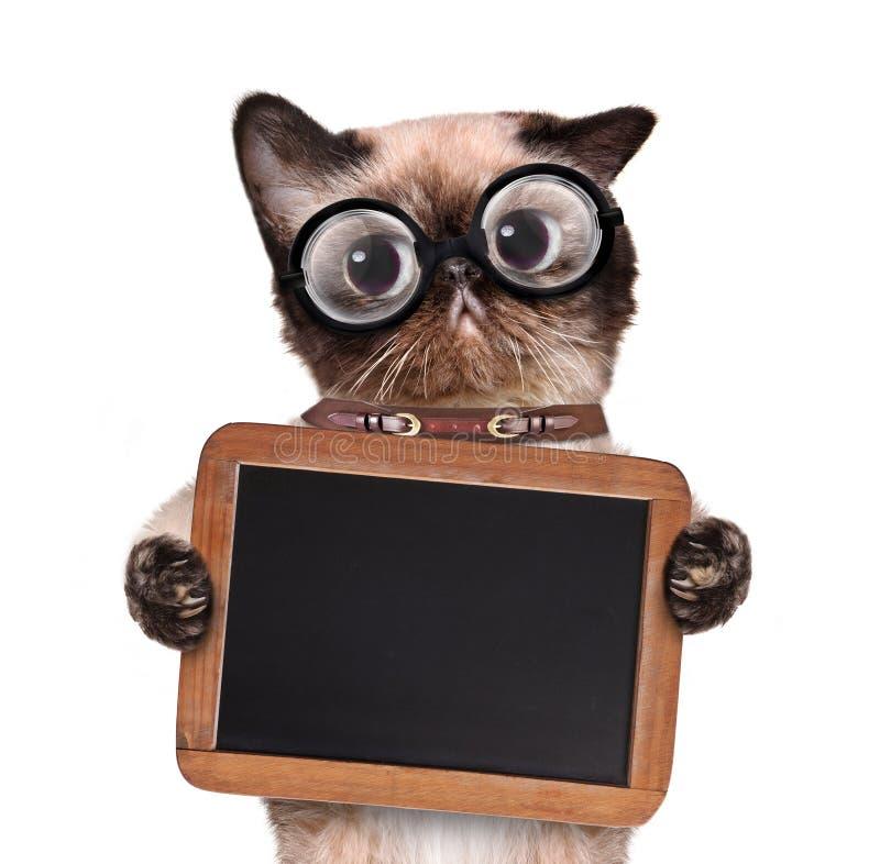 Katt som rymmer en svart tavla royaltyfria bilder