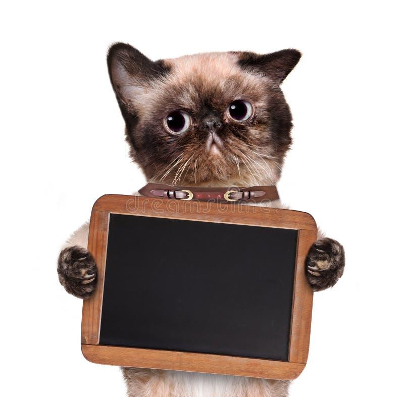 Katt som rymmer en svart tavla royaltyfri fotografi