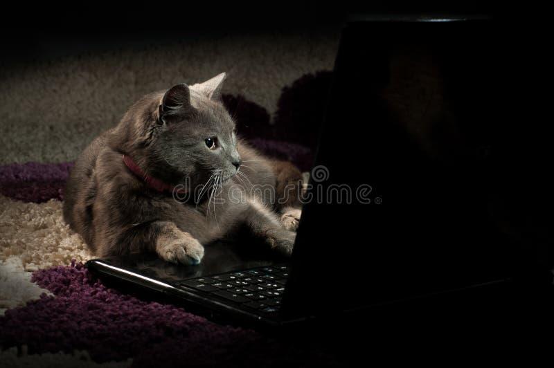 Katt som ser på en bärbar dator royaltyfria foton