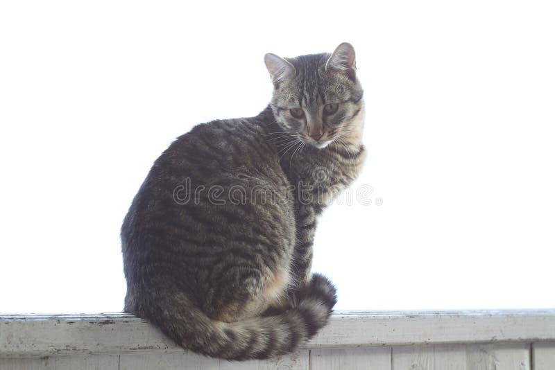 katt som ser upp royaltyfri fotografi