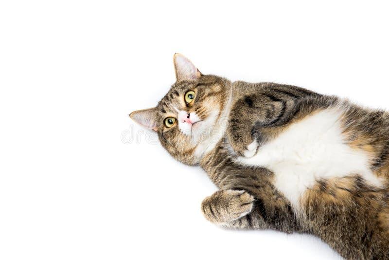 katt som ser upp royaltyfria foton