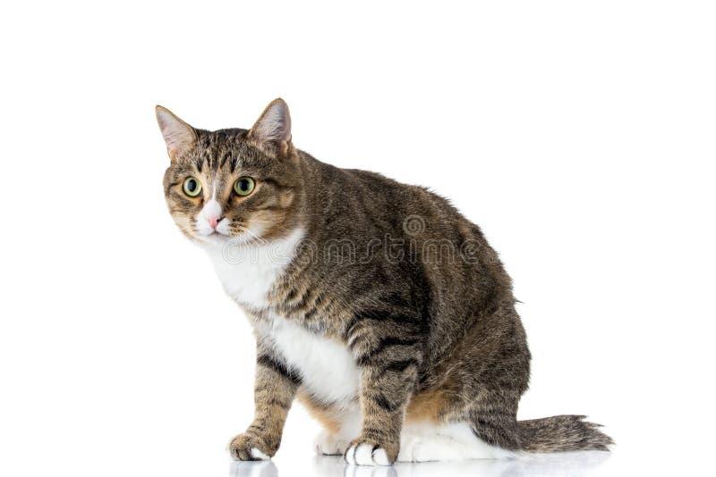 katt som ser upp arkivbild