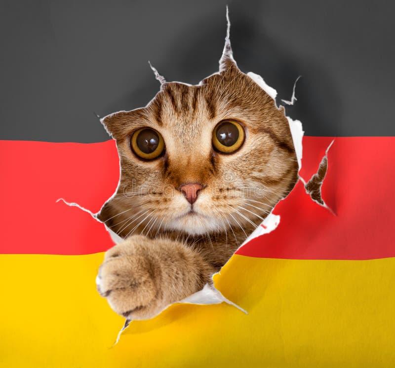 Katt som ser upp till och med hålet i pappers- tysk flagga fotografering för bildbyråer
