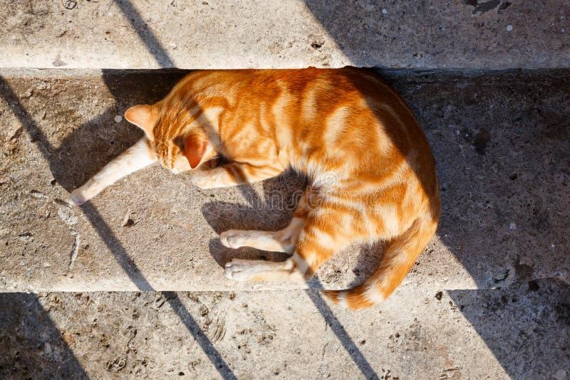 Katt som sover i solen royaltyfri fotografi