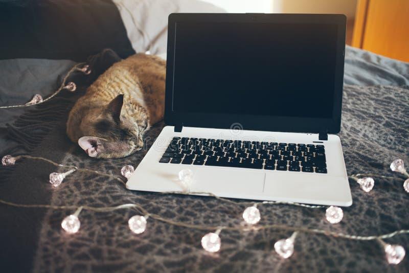 Katt som sover på sängen nära bärbara datorn royaltyfri fotografi
