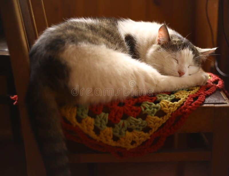 Katt som sover på trästol i interiour för landshus royaltyfria bilder