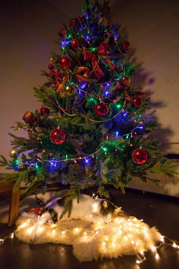 Katt som sover under julträd arkivbild