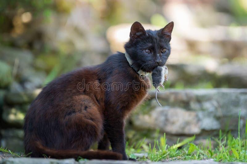 Katt som spelar med en död vågbrytare royaltyfri bild