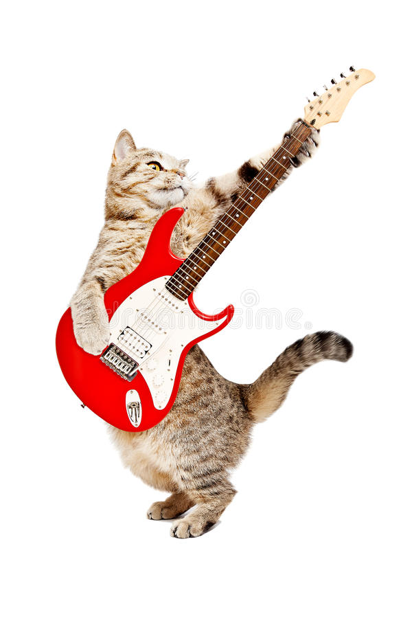 Katt som spelar på den elektriska gitarren royaltyfri bild