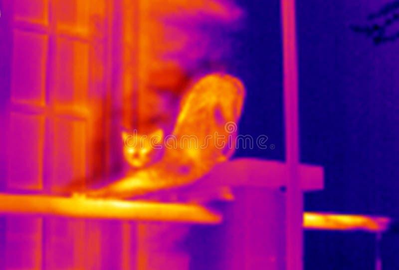 Katt Som Sträcker Thermographen Royaltyfri Foto