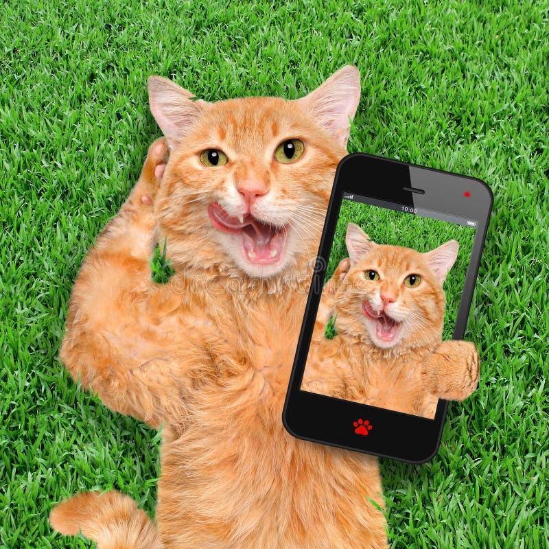 Katt som tar en selfie med en smartphone royaltyfri bild