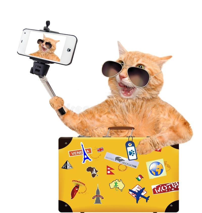 Katt som tar en selfie med en smartphone royaltyfria foton