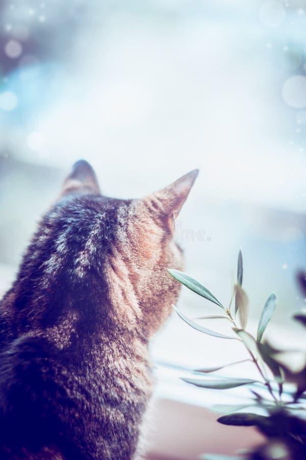 Katt som ut ser fönstret, bakre sikt arkivbild
