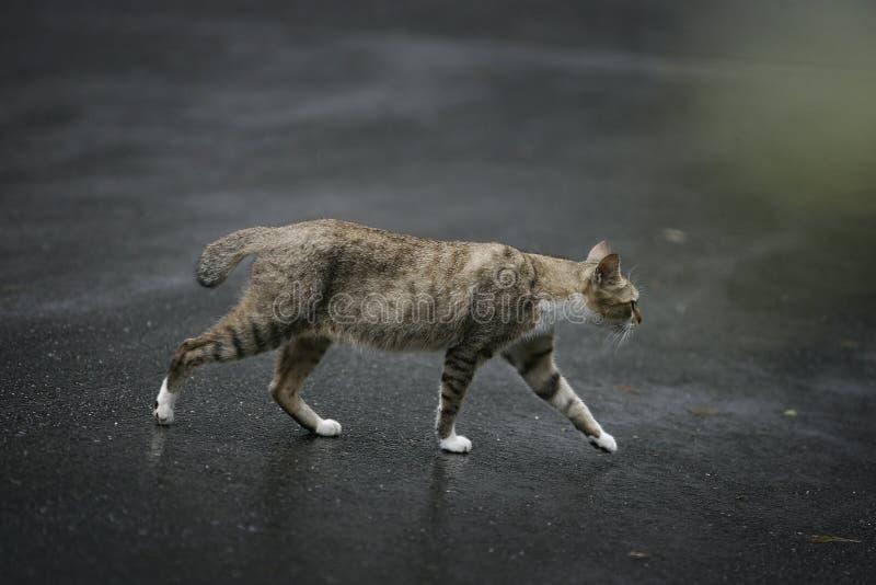 Katt som utomhus går arkivbild