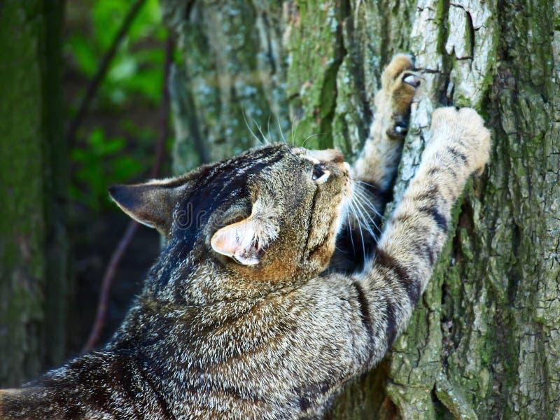 Katt som vässar jordluckrare på ett träd. royaltyfria bilder