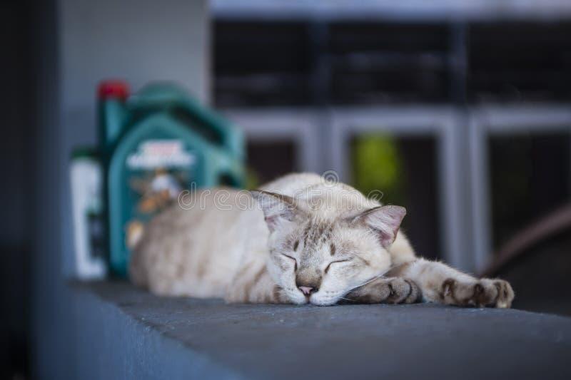 Katt som vilar på en vägg arkivfoto
