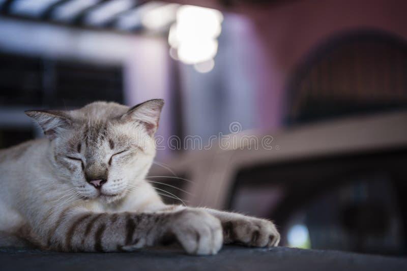 Katt som vilar på en vägg royaltyfri foto