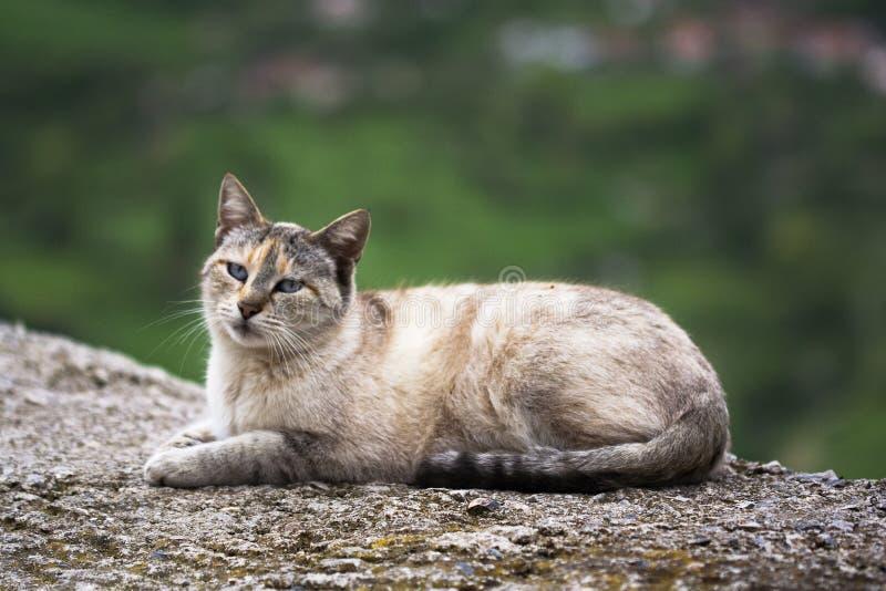 Katt som vilar på vägen royaltyfri bild