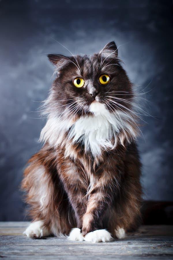 Katt stående av en rolig katt med stora gula ögon royaltyfri fotografi