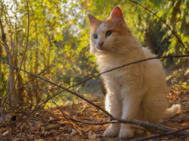 Katt - stora gröna ögon, blick arkivfoto