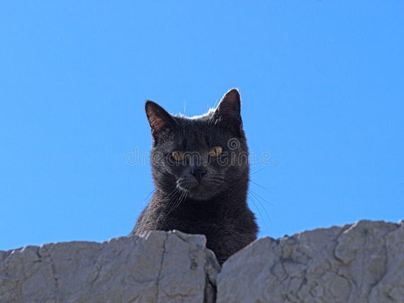 Katt svart, himmel, hår, skönhet, ögon, gröna ögon som är blåa, sten, sjösida arkivfoton