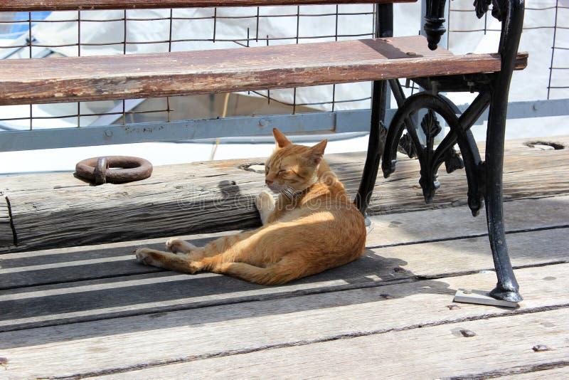 Katt under bänk på sommardagen Sova den ljust rödbrun katten i skugga av bänken arkivbilder