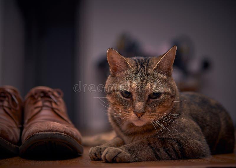 Katt vid skon fotografering för bildbyråer