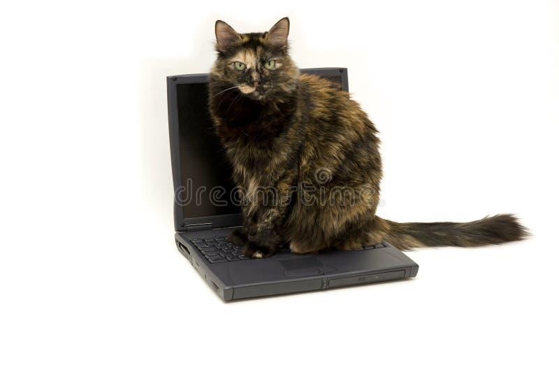 kattbärbar dator royaltyfri foto