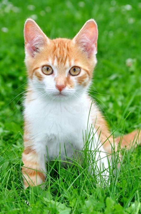 kattbarn fotografering för bildbyråer