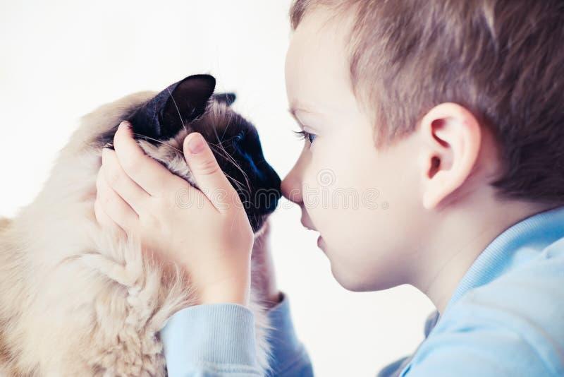 Kattbarnbalinese tillsammans att spela vänomsorg fotografering för bildbyråer