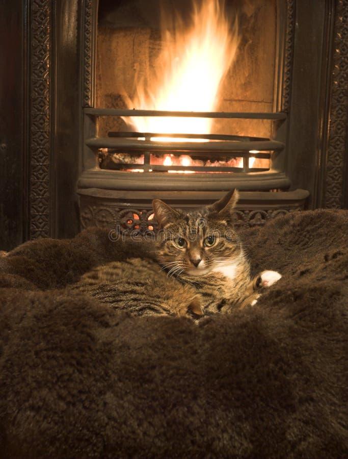kattbrand fotografering för bildbyråer