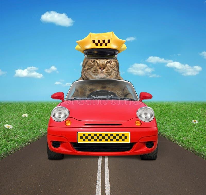Kattchaufför på vägen royaltyfri foto