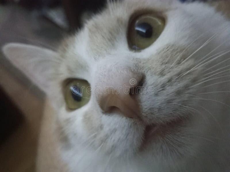 Kattcloseup arkivbild