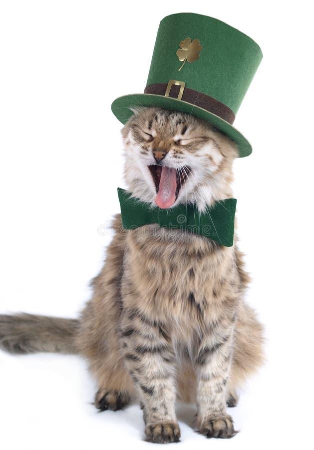 kattdag patrick s som sjunger st arkivfoton