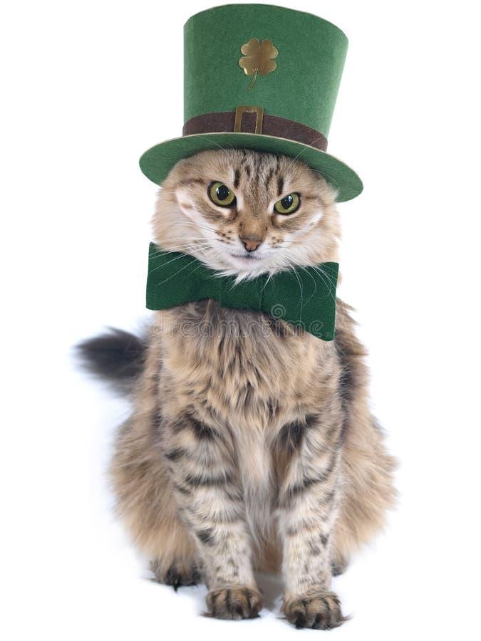 kattdagpatrick röd s st fotografering för bildbyråer