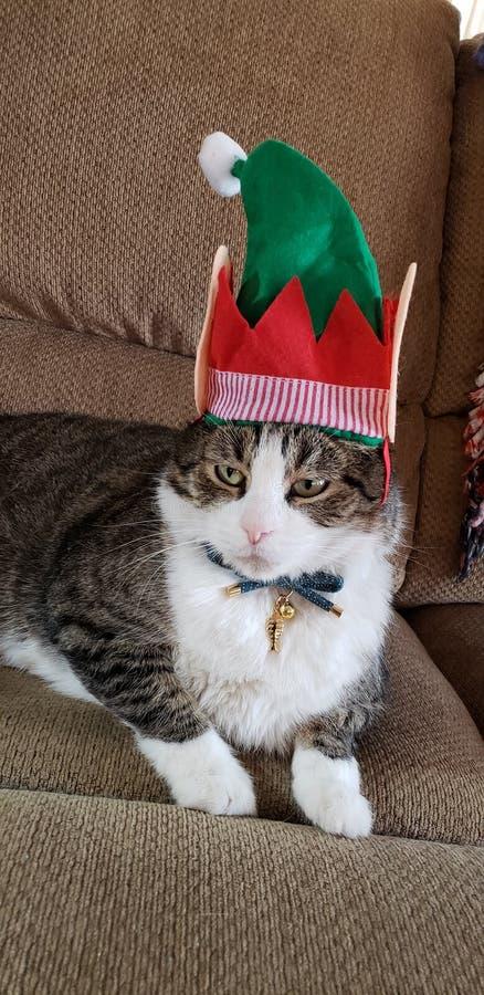 Kattdjur i älvajulhatt royaltyfria bilder