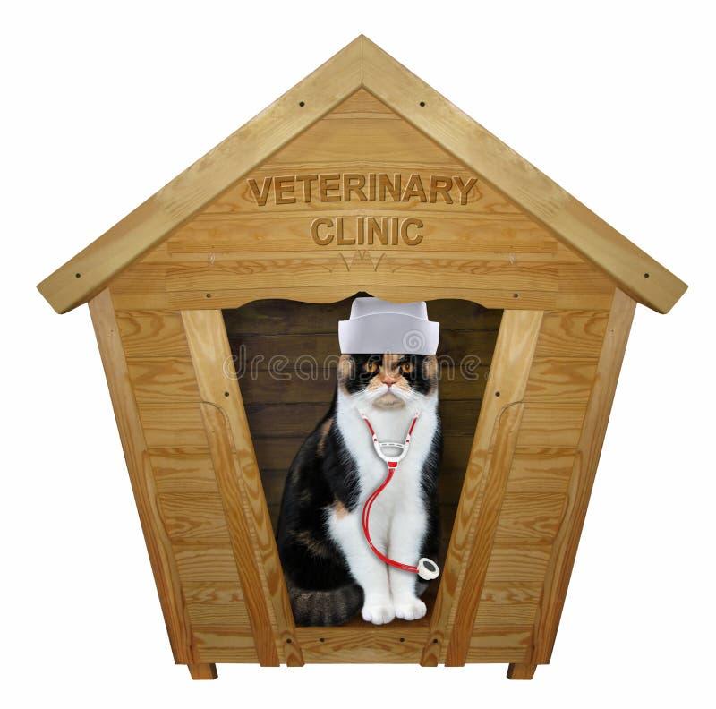 Kattdoktor i ett träbås royaltyfri bild