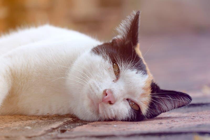 Katten är sömnig på jordningen royaltyfri foto