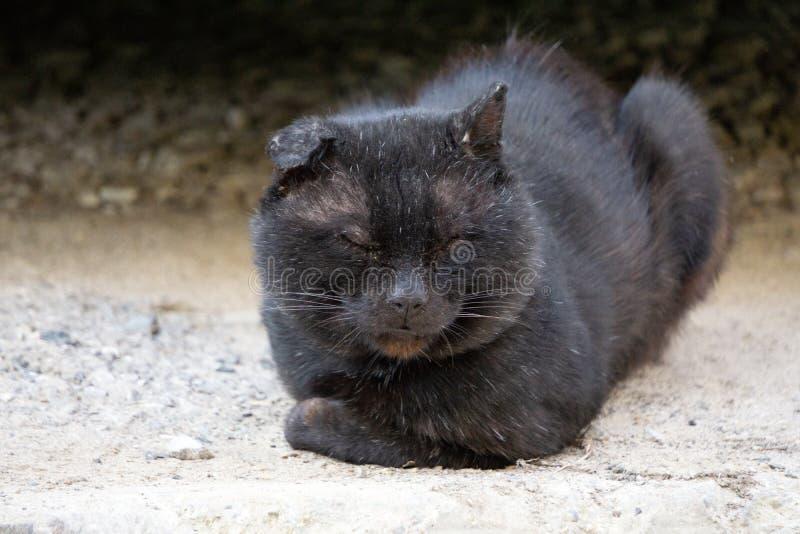Katten är svart, men ögonen är gula Orsak och skönhet av katten royaltyfri foto