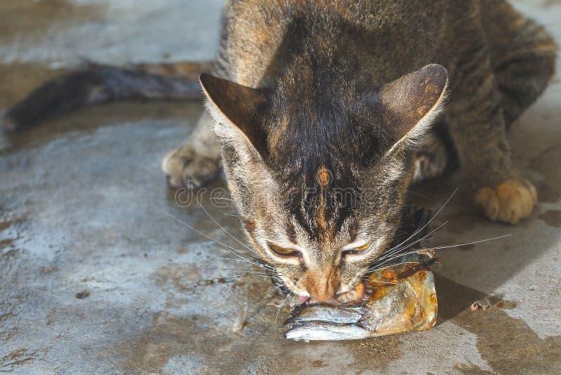 Katten äter fisken arkivfoton