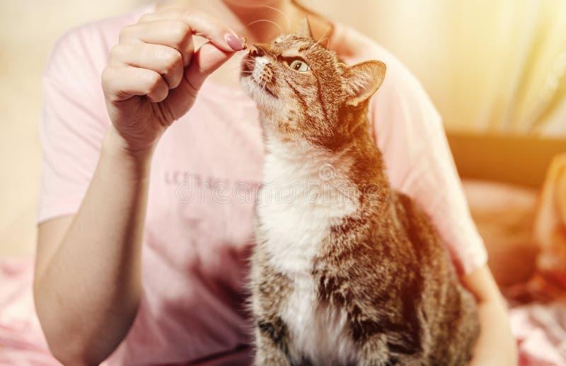 Katten äter från händer av flickan royaltyfri foto