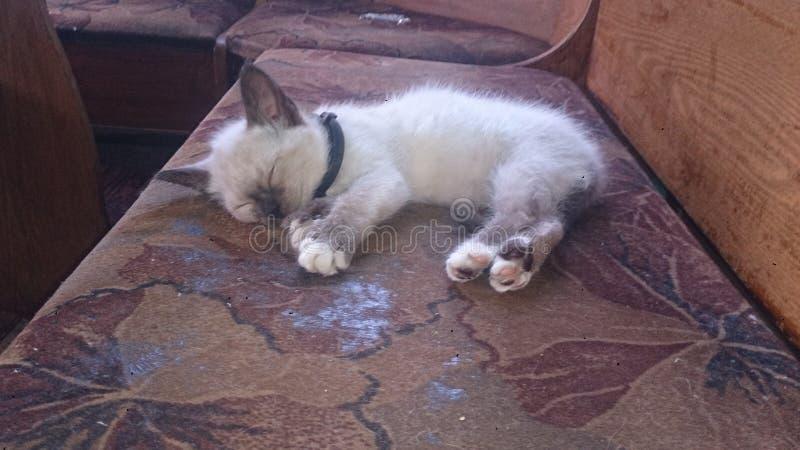 Katten royaltyfri foto