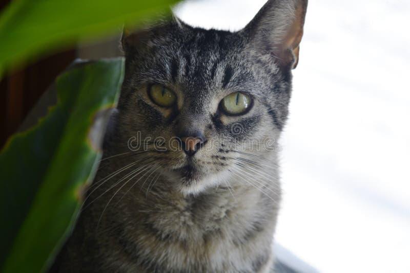 Katten fotografering för bildbyråer